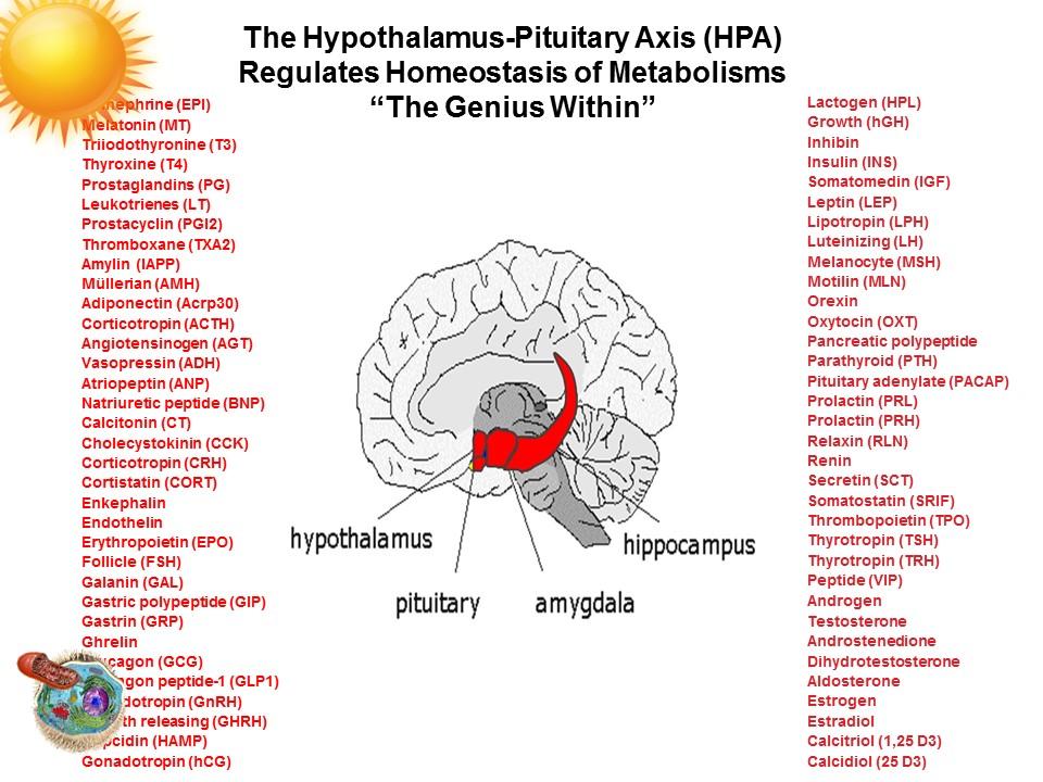 hpa-hormones